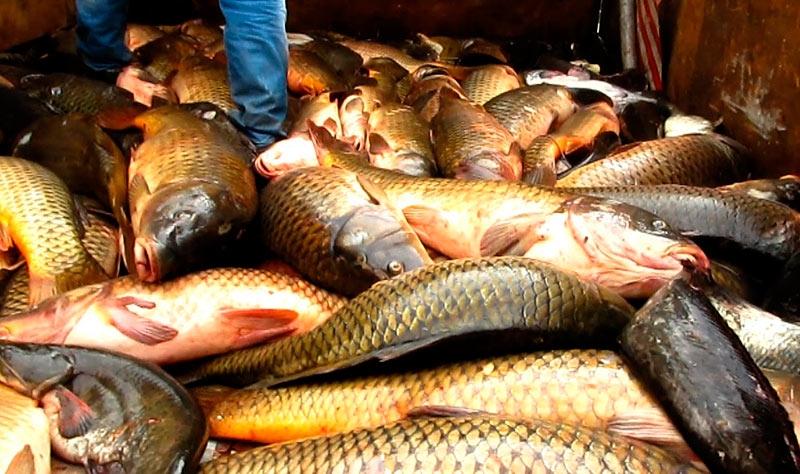 Куплю рыбу в тюмени оптом
